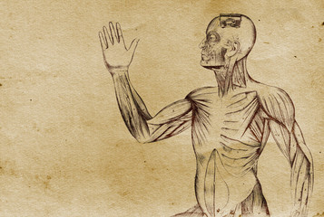 Anatomy Body Illustration (from late 1800)