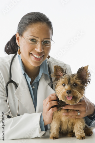 African female veterinarian with Yorkshire Terrier puppy