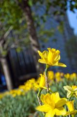 Flower City 2