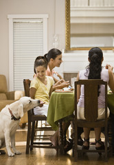 Hispanic girl feeding dog from table