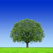 Baum mitten im Feld
