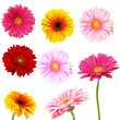 Perfect spring daisies collection isolated on white