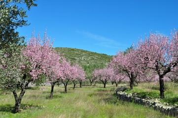 Mandelblütenbaumparade