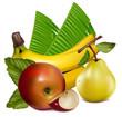 Vector illustration. Fruits.