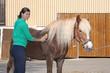 Reiterin putzt Pferd