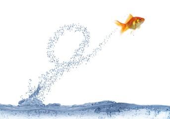 executing after loop jump fish