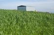 Agricultural Modern Building