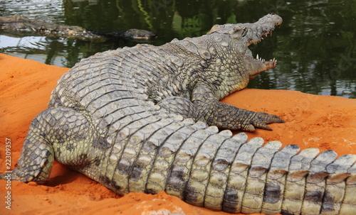 Aluminium Krokodil Crocodile