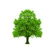 Baum auf weissem Hintergrund
