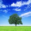 Saubere Umwelt