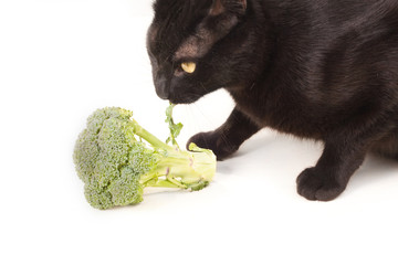 Kater nascht am Brokkoli