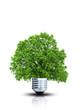 Baum in einer Glühbirne