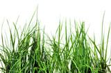 herbes sauvages sur fond blanc
