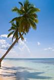 palms on the beach island