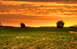 Farm landscape in evening time of spring