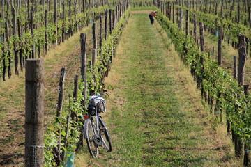 contadino in bicicletta
