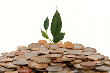 Money Tree. Isolated on white background
