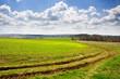 Spring on meadow landscape
