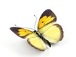 Butterfly - 3d render illustration on white background.