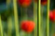 Leinwanddruck Bild Schnittblume