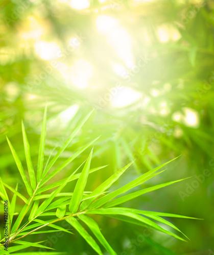 bambus-3d