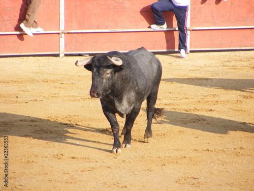 Staande foto Toro