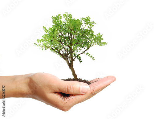 Papiers peints Bonsai Tree in a hand