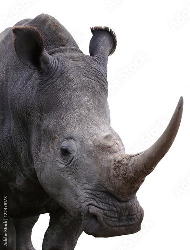 Fotobehang Neushoorn Rhinoceros - Isolated