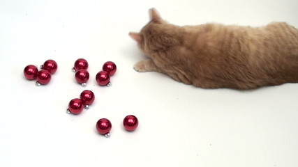 Cat plays with holiday ornaments V1 - HD