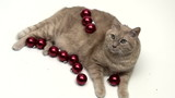 Cat covered in Christmas ornaments - HD