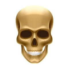 Human skull. Vector.