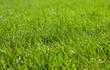 Rasen kurz geschnitten und gepflegt