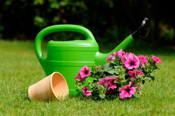 Blumen umpflanzen