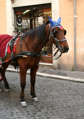 Hourse hire in Rome