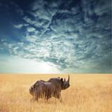 Fototapeta azja - duży - Dziki Ssak