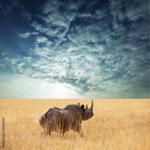 Fotobehang Neushoorn Rhino
