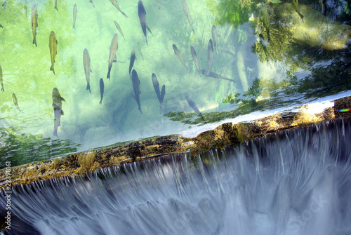 Fish and waterfall