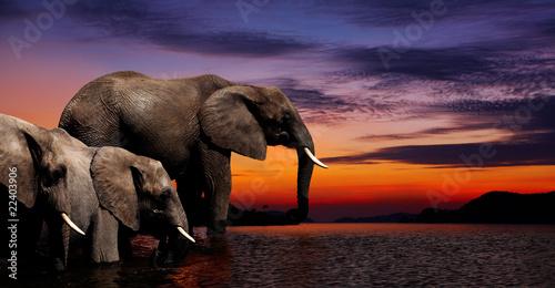 fantasy-slonia