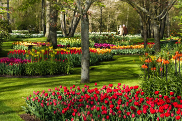 Colorful park in spring