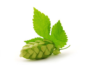Hop cone with leaf on white background