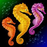 Vector Seahorse poster