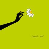 Fototapeta fortuna - stokrotka - Kwiat