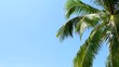 Tropical Paradise at Maldives with palm and blue sky