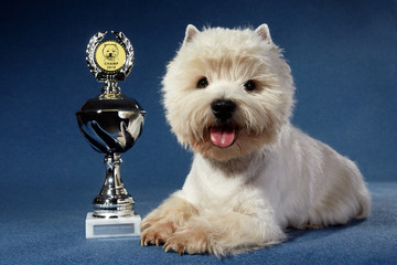 West Highland White Terrier with goblet