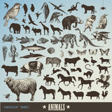 set of 60 detailed animal illustrations and  animal silhouettes