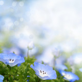 Soft delicate summer flowers background