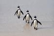 pinguini sulla spiaggia di Boulder's