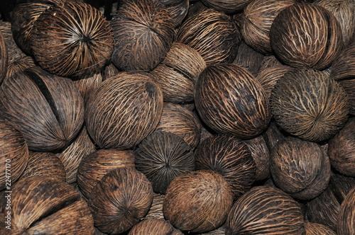 graine de palmier bouddha photo libre de droits sur la banque d 39 images image. Black Bedroom Furniture Sets. Home Design Ideas