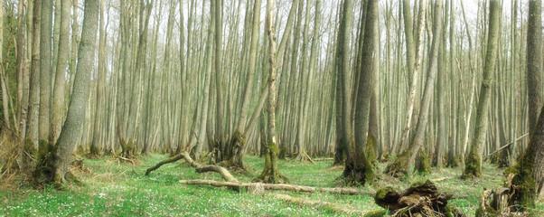 Panoramabild Märchenwald