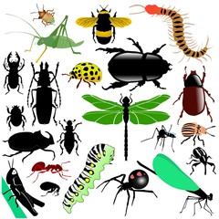 colored vector set of insects